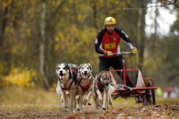 Najszybsze psy pod Bełchatowem